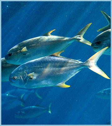 Mexico Beach Florida Fishing Report